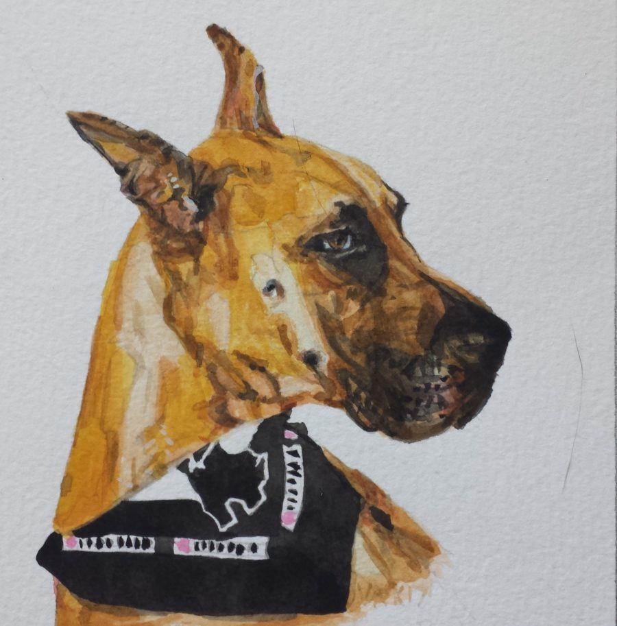 Boxer watercolor