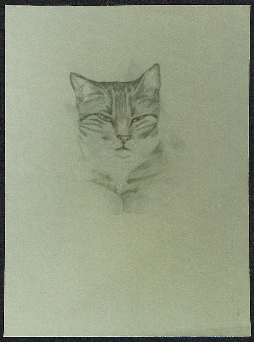 cat pencil sketch
