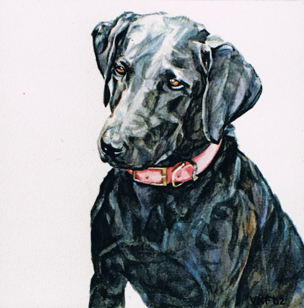 Watercolor portrait of a Labrador puppy. The dog is seen head and shoulders with a pink collar in a sitting posture. She looks out to the right and is painted in a realistic style with meticulous attention paid to detail and expression of personality. Title: Jet