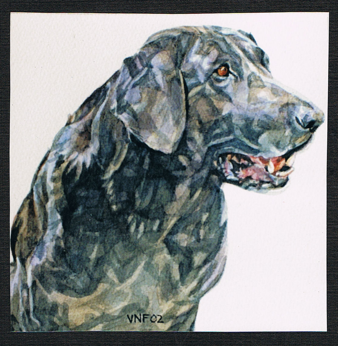 Watercolor portrait of a black Labrador. The dog is seen head and shoulders in a sitting posture. The dog is alert, mouth open and she looks out of the page to the right. The style is realistic with meticulous attention to detail and expression of personality. Title: Maggie